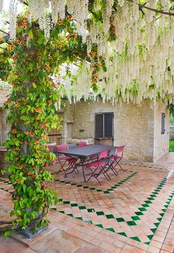 Wisteria y Campsis radicans en un jardín de la Provenza, Francia