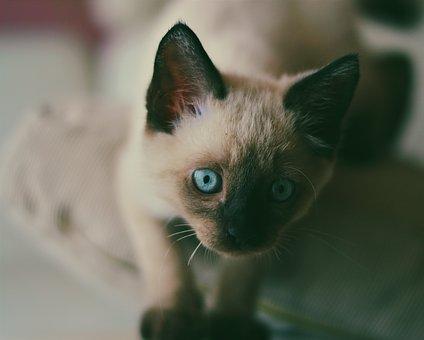 imágenes de gatitos kawaii