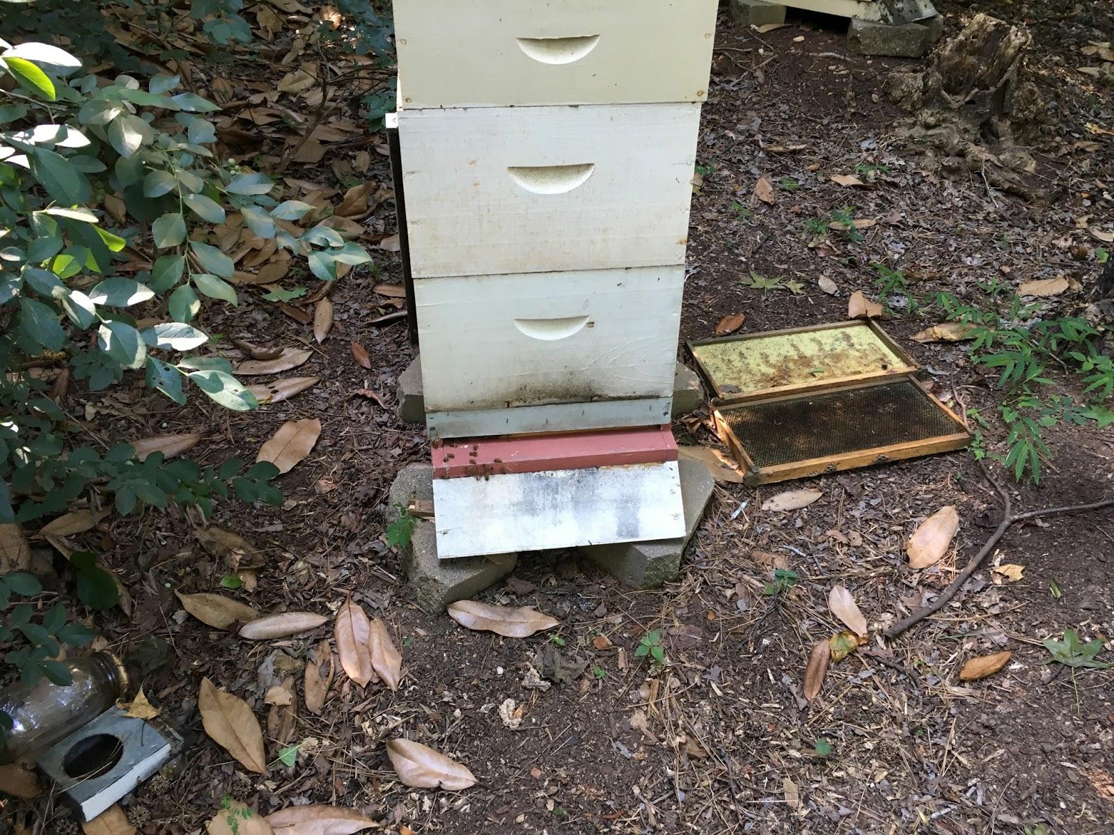 Help me do my essay how honeybees choose a nest site