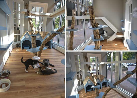 Idea Bergambar Untuk Rumah Kucing Kongxie Kongsi