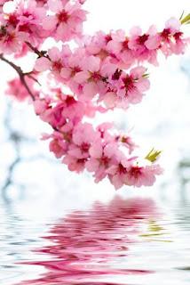 ramas-en-flor