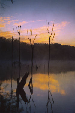 swamp at sunrise