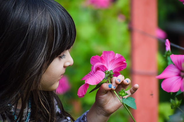 A little girl sniffing flowers