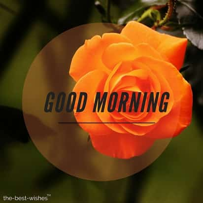 good morning with orange flower