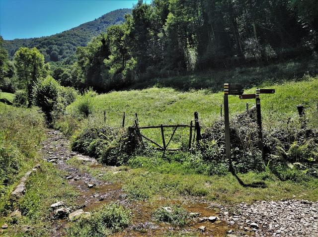 Bifurcación con el sendero encharcado por donde volveríamos