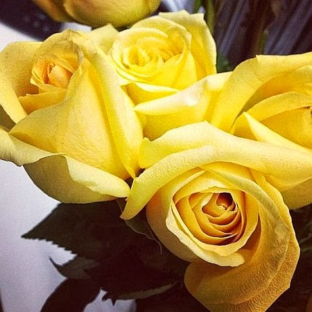 perfect yellow roses