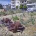 Δείτε πως έφτιαξαν ένα λαχανόκηπο στην καρδιά της Νίκαιας  (Βίντεο)