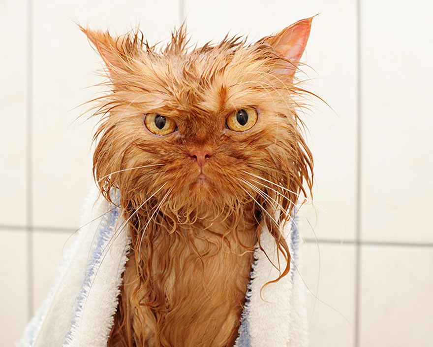 funny-wet-cats-5