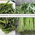 KANGKONG: Why it is Superfood and Yet it is Dangerous?