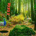 Peafowl Forest Escape