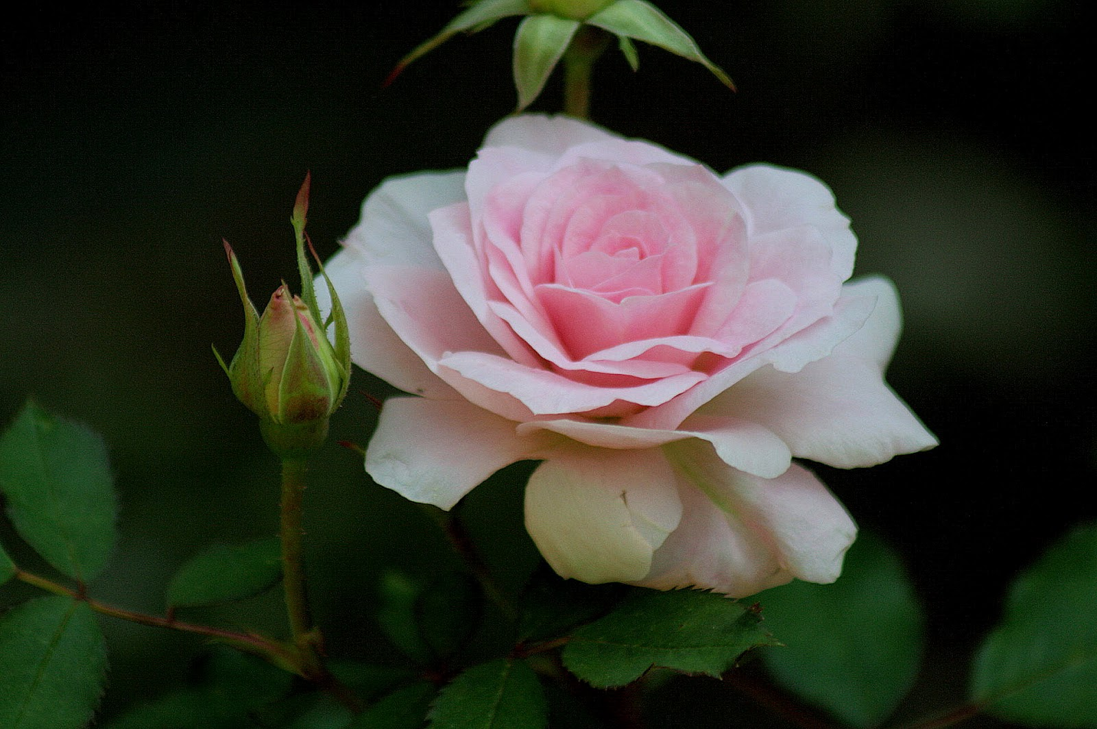 A Hocking Hill S Garden The Rose Garden