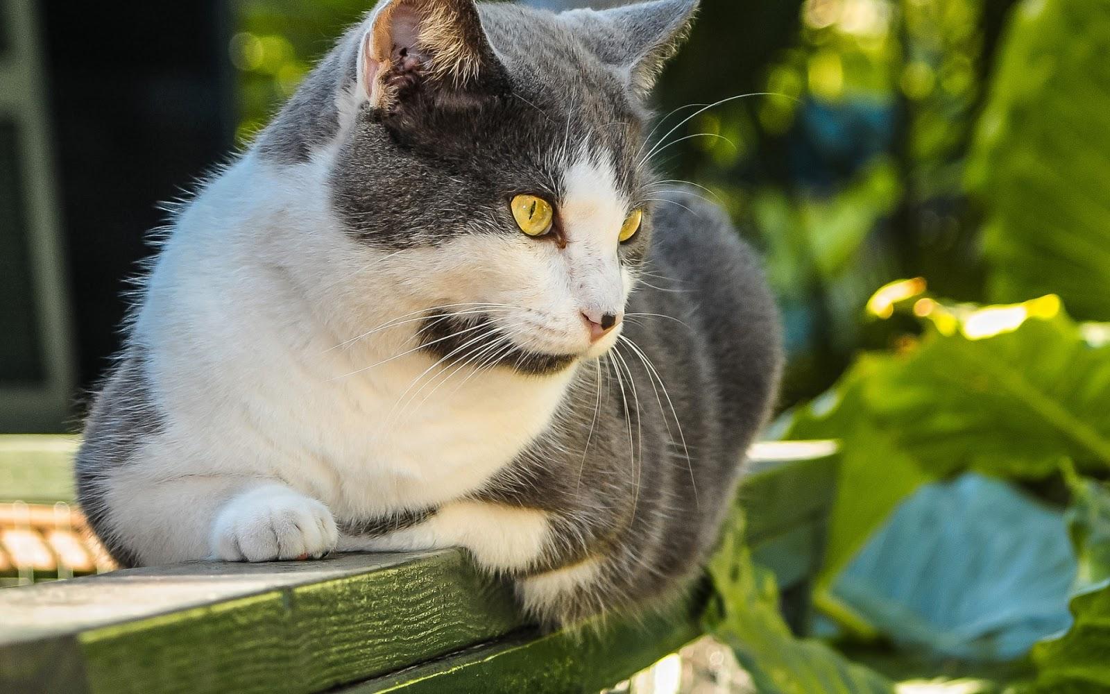 Hermoso Gato En El Jardín