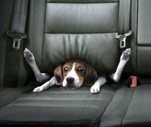 viajar en coche con nuestro perro