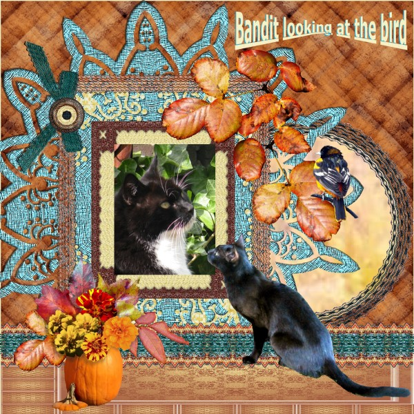 Oct.2016 - Bandit looking at the bird