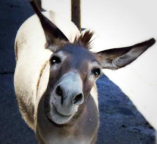 Bible Donkey Zechariah Jesus