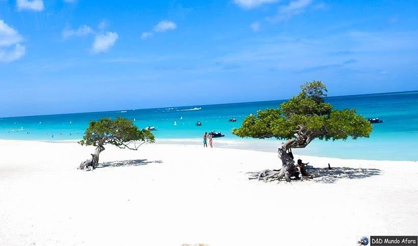 Árvores tombadas (divi-divi) Aruba - Diário de Bordo: cruzeiro pelo Caribe