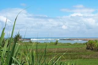 Pantai congot terlihat dari jauh