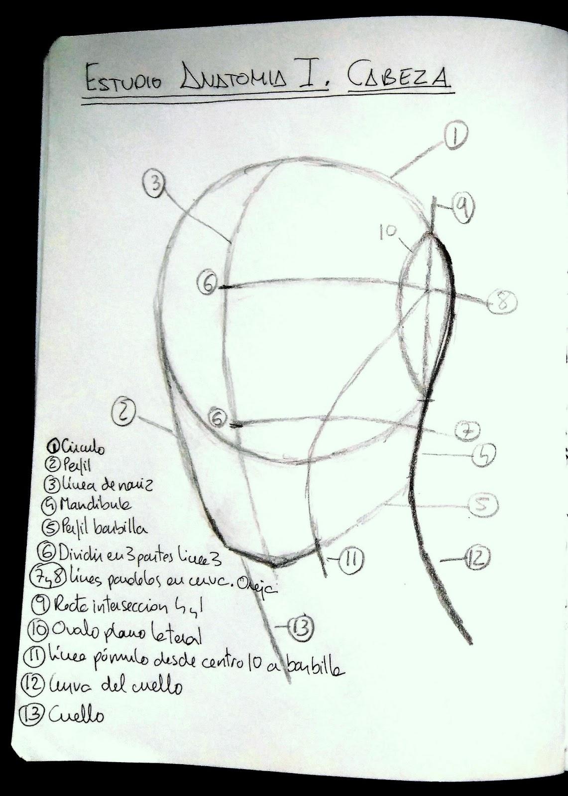 Cuaderno de trabajo de Alicia: Estudio Anatomía