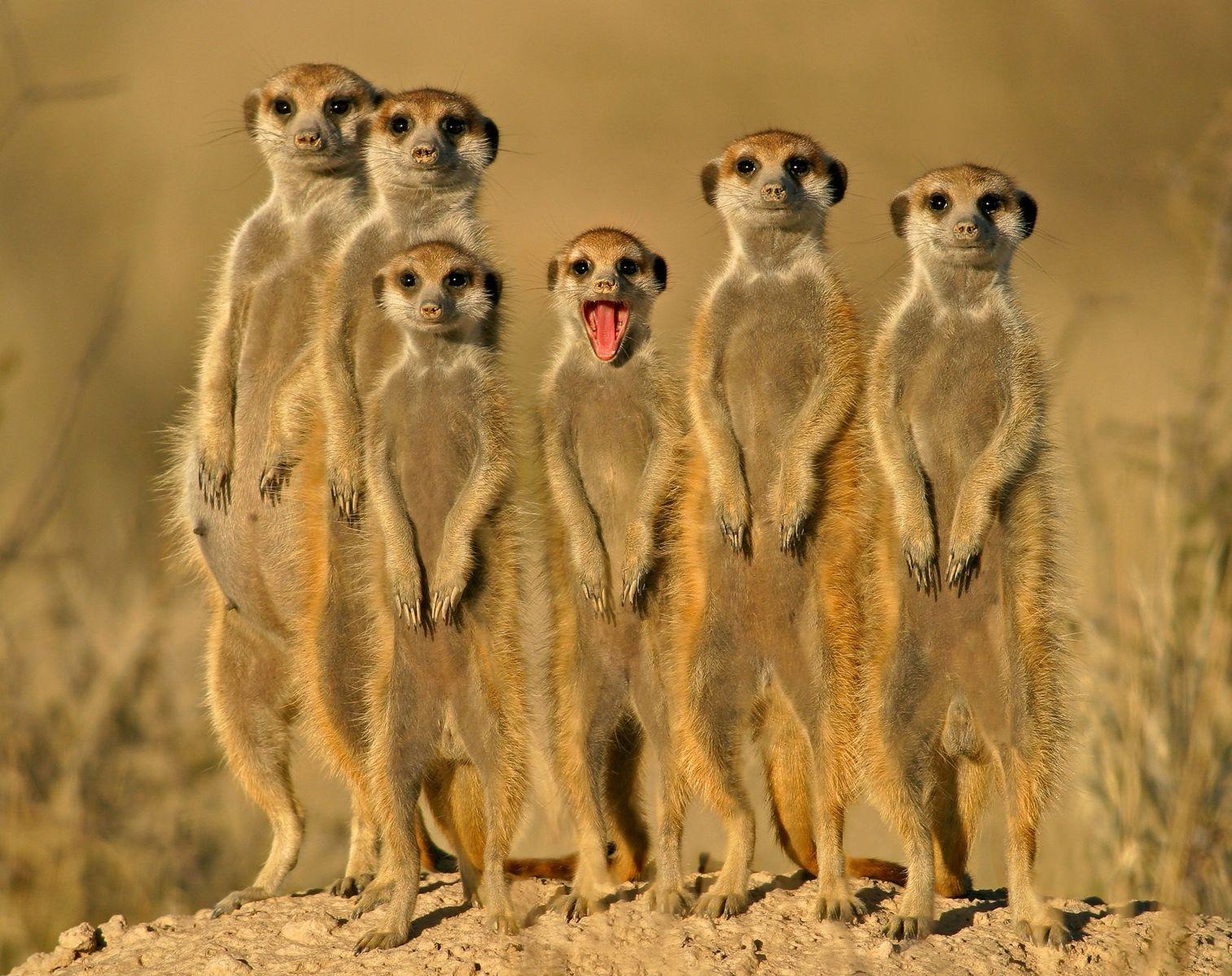 Beautiful Animals Safaris: Safari Amazing ! Beautiful ...
