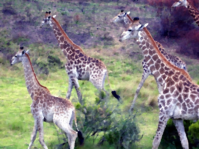 The giraffe is evidence for creation and a refutation of evolution