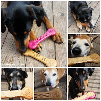 The Lapdogs give Flavorit ALL PAWS UP!  #RescueDogs #AdoptDontShop #DogChew #Flavorit #LapdogCreations ©LapdogCreations