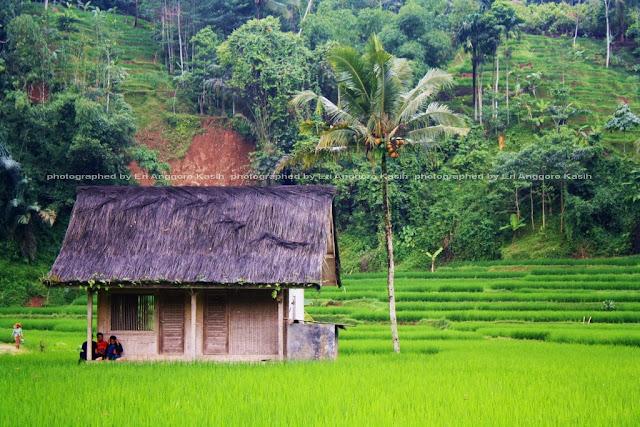 Suasana pedesaan yang tenteram