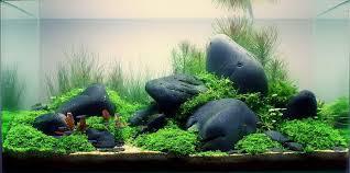hồ thủy sinh bố cục đá cuội đơn giản đẹp mắt
