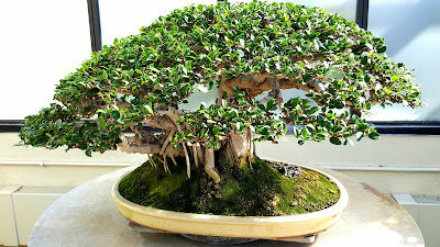 National Penjing and bonsai museum