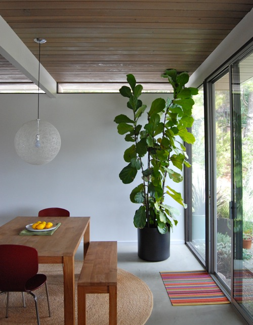 Condo Design: Interior Styling | Indoor Plants