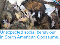 http://sciencythoughts.blogspot.co.uk/2015/06/unexpected-social-behaviour-in-south.html