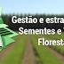 Silvicultura: Gestão e estratégias em sementes e viveiros florestais
