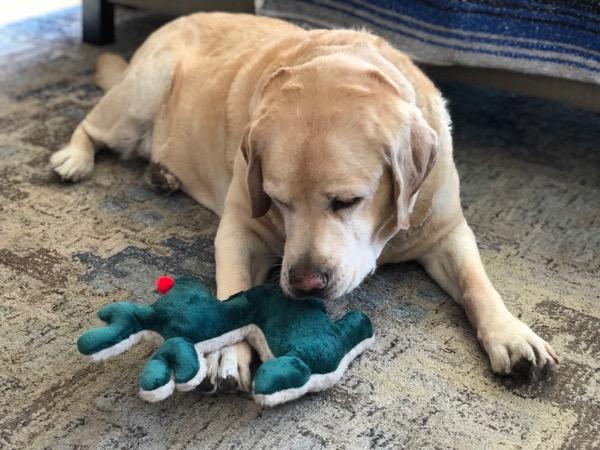 Labrador Rudolph Reindeer toy