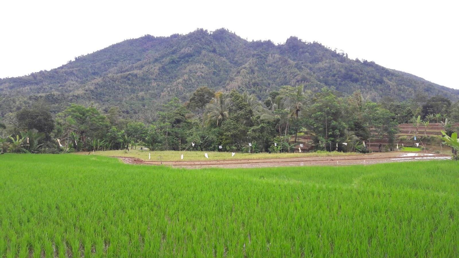 Desa Ujung Tebu Kecamatan Ciomas Kabupaten Serang