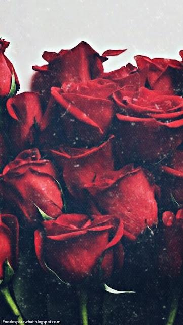 Fondo de Pantalla de Rosas Rojas
