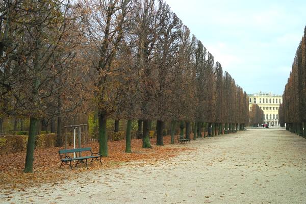 vienne château schönbrunn parc automne