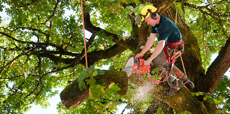 Tree-lopping-services-that-Perth