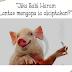 Kenapa Babi Diciptakan, Lantas Diharamkan? Ternyata DNA Babi Dengan Manusia Mempunyai Kesamaan Yang Tinngi