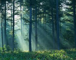 Manfaat Hutan Bagi Kehidupan Manusia (Manfaat Langsung dan Tidak Langsung)