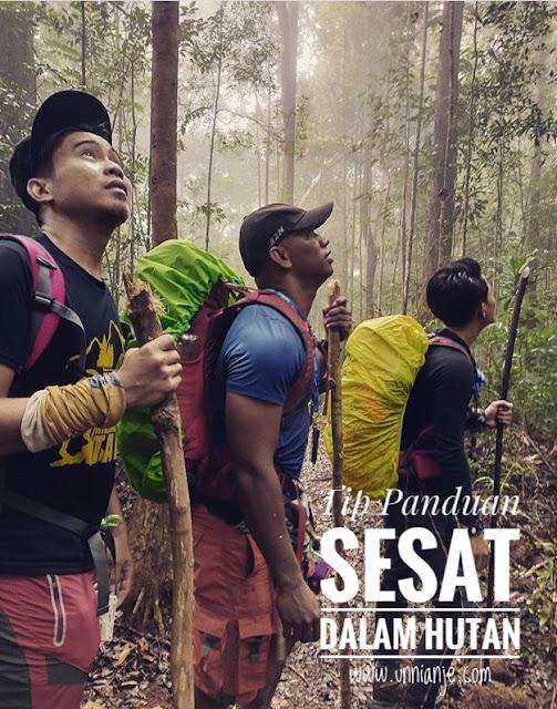 Tip panduan ketika sesat dalam hutan