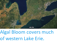 http://sciencythoughts.blogspot.co.uk/2017/10/algal-bloom-covers-much-of-western-lake.html