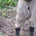 Mencuri Ular, Pencuri ini Masukkan Ular yang Dicuri Dalam Celana Dia Sendiri