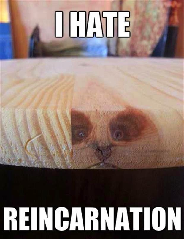 Funny grumpy cat hates reincarnation joke picture