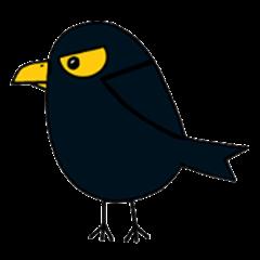 Birds to find friends