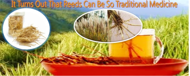 It Turns Out That Reeds Can Be So Traditional Medicine