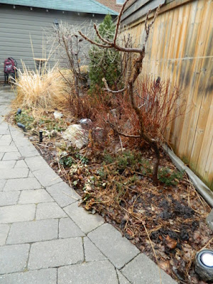 Leaside Toronto Back Garden Spring Cleanup Before by Paul Jung Gardening Services--a Toronto Organic Gardening Company