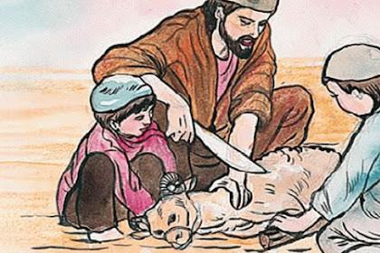 Syarat & Ketentuan Menyembelih Hewan Qurban