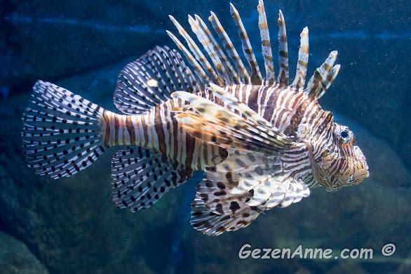 tehlikeli güzellik adı altında sunulan zehirli balıklar, Sea Life Akvaryum İstanbul