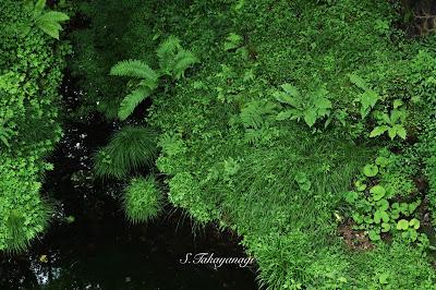 群馬県 湖沼 日本の風景