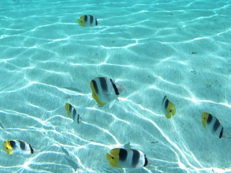Marine Biome Plants