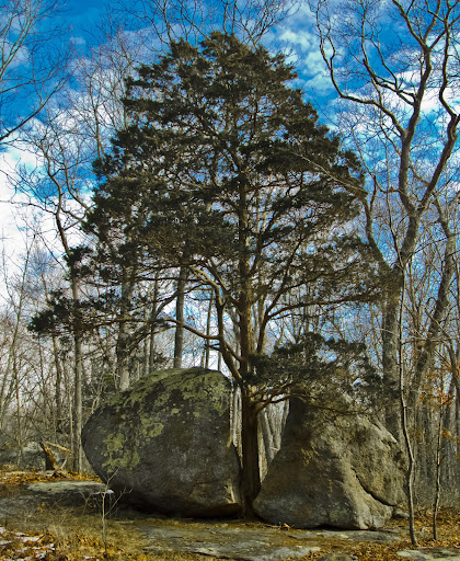 Split Rock Cypress, Westwoods, Guilford CT